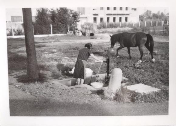donna, pompa e cavallo