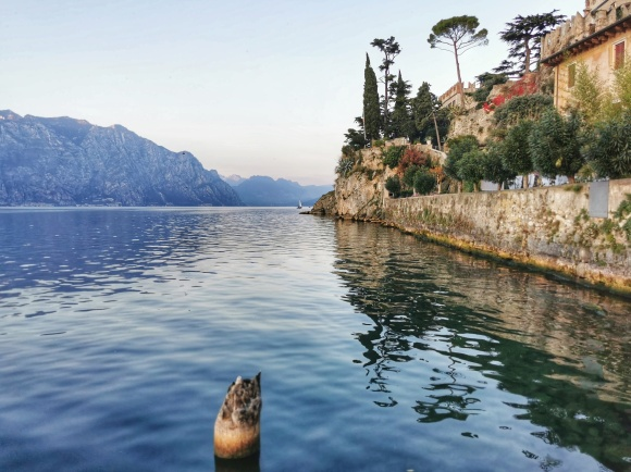 CUCCIOLODiRUSPA | Lago a Malcesine