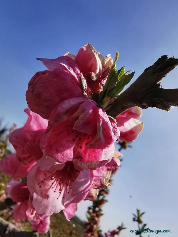 Fiore rosa per CUCCIOLODiRUSPA