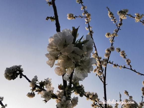 Fiori bianchi CUCCIOLODiRUSPA